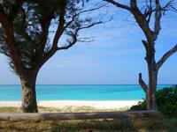 与論島のウドノスビーチ - のんびりできるベンチ的な倒木もあり
