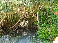 与路島の与路のビーチ - 集落側からは木々を抜けて行きます