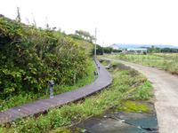 サガリバナ並木