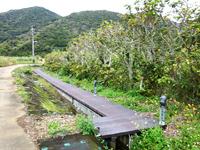 与路島のサガリバナ並木 - 高原海岸へと行く道の近く