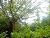 与路島の大縄/ナブリュウ崎への後半の道 - 木々は結構素晴らしいかも?