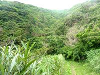 与路島の大縄/ナブリュウ崎への後半の道 - うっそうとした森の中を進みます