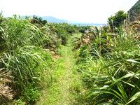 与路島の大縄/ナブリュウ崎への後半の道 - 森が開けると海まで近し