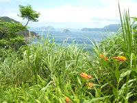 与路島の大縄/ナブリュウ崎 - 木々や草がうっそうとしています
