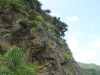 与路島の大縄/ナブリュウ崎 - 大きな岩肌がある部分