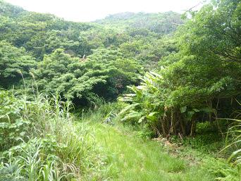 与路島の大縄/ナブリュウ崎の奥の道「浜へ降りる場所から先はさらにうっそうとしています」