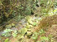 与路島の大縄/ナブリュウ崎の奥の道 - 小さな沢がいくつかありました