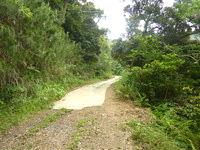 請島の石川道への前半の道 - 舗装が所々で切れています