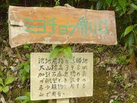 請島の大山ミヨチョン岳昇り口 - 登山の際の注意事項や大山についての案内板