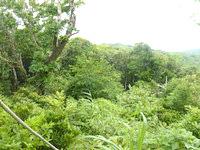 請島の大山ミヨチョン岳登山道 - ロープを使って上り下りするポイントも有り