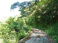 与路島の与路島の山道 - ノエビアへと続く道