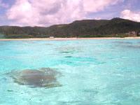 座間味島の阿真ビーチの海の色 - 沖まで行くとさらに透明度アップ