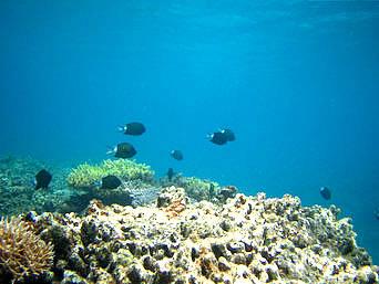 座間味島の安室島近くの海の中「珊瑚はほとんど無くて魚もそんなに多くない海」