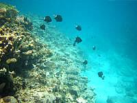 座間味島の安室島近くの海の中 - 魚の種類がかなり少なかったかも?
