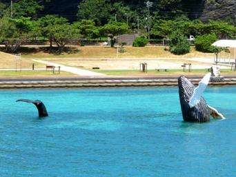 座間味島の鯨のオブジェ「港にこんなオブジェがあります」