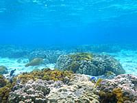 沖縄本島離島 座間味島の阿真ビーチのインリーフの写真