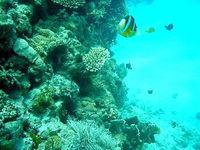 古座間味海の中(沖縄本島離島/座間味島の水中/素潜り/ダイビング)