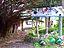 奄美大島の渡連キャンプ場