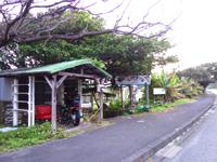 奄美大島の渡連キャンプ場 - 大きなガジュマル?が目印