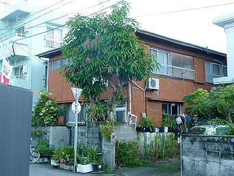 奄美大島の民宿宝吉