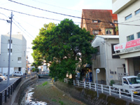 奄美大島の奄美ゲストハウスTegeTege - 賃貸マンションの一角(移転前)