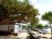 奄美大島の奄美リゾート ばしゃ山村 - 海までワンクッションあります