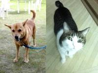 久米奥武島の民宿あみもと/ロイアルビーチロッジあみもと - 昔は看板犬、今は看板猫?