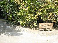 北部の琉球古民家ちゃんや〜 - 場所がわかりにくいので案内板を見落としなく