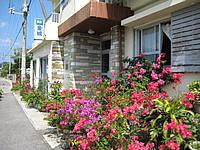 西表島の金城旅館/民宿金城 - 玄関脇の花がきれいでした