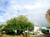 西表島のペンション なかまがわ - 自然豊かな西表島なのでこんな奇跡もw