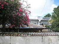 石垣島の民宿あさどや - ブーゲンビリアの花がキレイでした - ブーゲンビリアの花がキレイでした