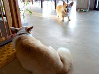石垣島の民宿あしび島 - ペット可の宿で看板犬もいます