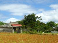 古宇利島のゲストハウスぶどうの樹 - 宿の前の看板が無くなっている・・・