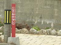 宮古島のひろちゃんペンション/ゲストハウスひろちゃん - 坂の「ニスキタグミ」から脇道に入ります