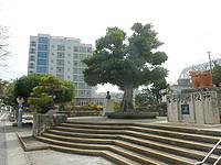 宮古島のホテルピースアイランド宮古島市役所通り - まさに宮古島市役所の広場の隣