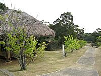 沖永良部島の大山野営場バンガロー - 茅葺きの建物もありました(宿泊する施設じゃないけど)