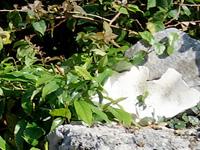 竹富島のすどまり かぁかん/かあかん - 以前はここに「かぁかん かわかみ」と明記