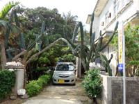 多良間島の民宿丸宮 - 緑豊かな庭があります