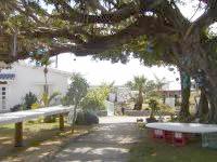 与論島の民宿楽園荘(ペンションパラダイス楽園荘) - 母屋から見た景色。ガジュマルの木。 - 母屋から見た景色。ガジュマルの木。