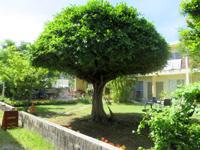 座間味島のペンション・チャーヴィラ - 緑豊かな広い庭がある宿